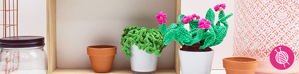 Crochet Succulents - The trend of this moment!