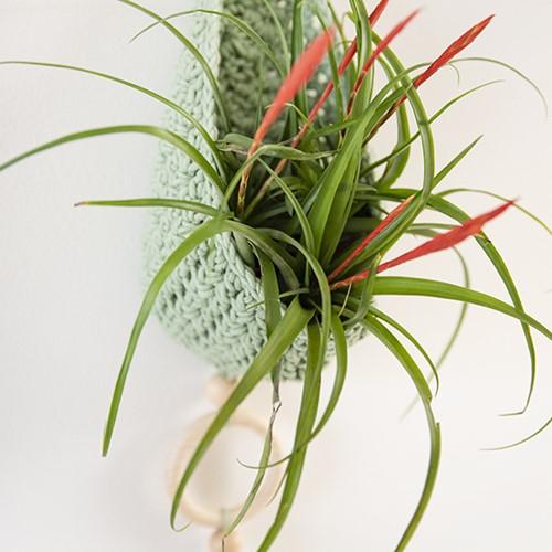 Haakpatroon Homedeco Plantenhanger