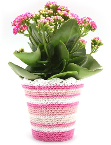 Pattern crocheted flower pot