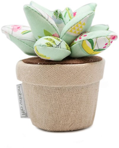 Pincushion Plant Life